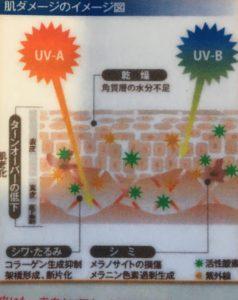 image-紫外線についての豆知識・・・続き | il divano(イル・ディヴァーノ)